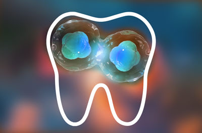 Regeneración dental con células madre, un paso más cerca